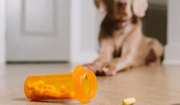 Why synthetic supplements are harmful for your pet and how to replace them!